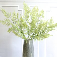 Green fern spray